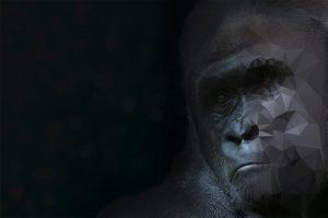 Gorilla Background