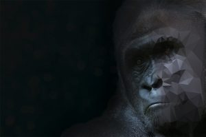 Gorilla Background